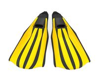 Diving fins isolated. On white background. 3D render Royalty Free Stock Image