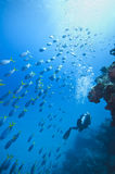 Diving the Great barrier Royalty Free Stock Images