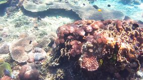 Diving in indian ocean, Indonesia. Underwater landscape, Bali, Nusa penida on coral gardden reef stock video