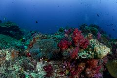 Diving at Koh Haa in Thailand stock image
