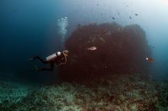Diving Maldives Stock Images
