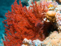 Coral polyps on the reef off the coast of Maldives Stock Images