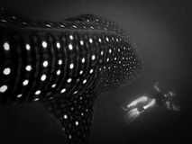 Shark attac. Marine life Stock Photo
