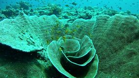 Diving Maldives - Coral stock video footage