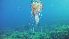 Diving in Mallorca Spain - Jellyfish