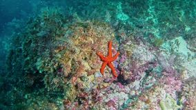 Diving in Mallorca Spain underwater - Sea Star stock video footage