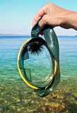 Diving mask with sea urchin royalty free stock photo