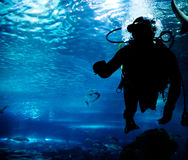 Diving in the ocean underwater Royalty Free Stock Photo