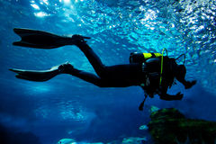 Diving in the ocean underwater Royalty Free Stock Photography