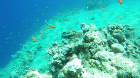 Diving over the reef. Corals stock footage