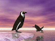 Diving Penguin. Two penguins, one diving Royalty Free Stock Images
