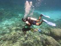 Diving people underwater in sea with corals and fish around, scuba diver open waters beginner course with professional instructor. And young kid first time royalty free stock images