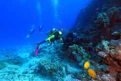 Diving in the Red Sea Royalty Free Stock Photo