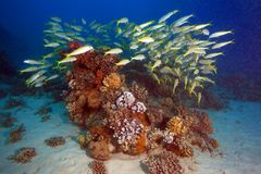 Diving in the Red Sea Stock Images