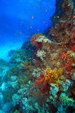 Diving in the Red Sea Royalty Free Stock Photography