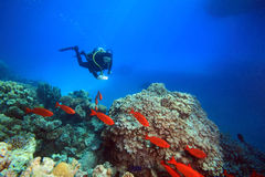 Diving in the Red Sea Royalty Free Stock Images