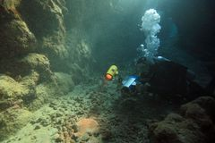 Diving in the Red Sea Stock Photography