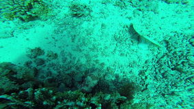 Diving in the red sea. stock video