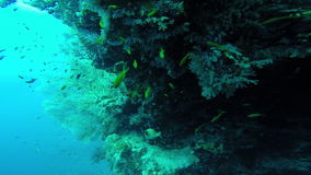 Diving in the red sea. stock video footage