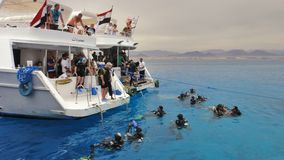 Diving in the Red Sea. Egypt Stock Images