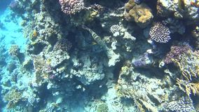 Diving on the Red Sea, impressive types of an amazing coral reef stock footage