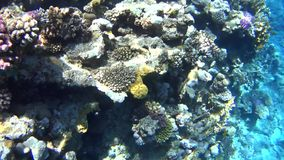 Diving on the Red Sea, impressive types of an amazing coral reef stock video footage