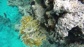 Diving in the Red sea near Egypt. Gorgeous colorful coral reef . stock video