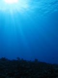Diving reef sunburst Stock Photos