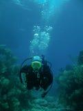 diving scuba στοκ φωτογραφία με δικαίωμα ελεύθερης χρήσης