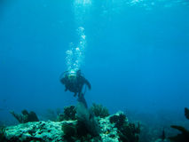 diving scuba Στοκ Φωτογραφίες