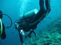 Diving in sea Royalty Free Stock Images