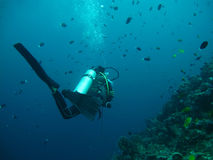 Diving in sea Royalty Free Stock Photography