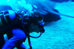 Diving with sharks. Diver in shark tank. Ushaka. Durban, South Africa Stock Photos