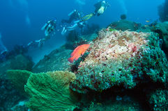 Diving Thailand. Summer underwater view Royalty Free Stock Photos