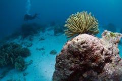 Diving Thailand Royalty Free Stock Photos