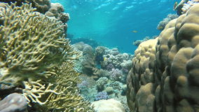 Diving on a tropical reef. Warm tropical sea. stock video