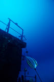 Diving Under Water. Adventure Diving on a sunken Ship wreck stock photo