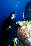 Diving Under Water. Adventure Diving on a Coral Reef, Indian Ocean stock photography