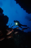 Diving Under Water. Adventure Diving on a Coral Reef, Indian Ocean royalty free stock photo