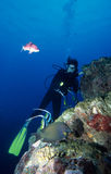 Diving Under Water. Adventure Diving on a Coral Reef, Indian Ocean royalty free stock image
