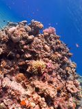 Diving in underwater coral reef world stock photo