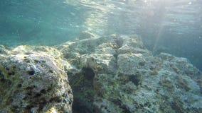 Diving Underwater footage Shot in Montenegro stock footage