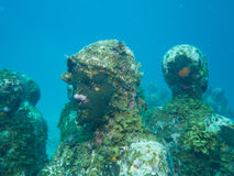Diving at the underwater museum cancun Stock Images
