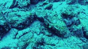 diving Vista di fondale marino in mare delle Andamane, Tailandia video d archivio