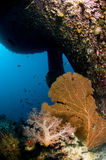 Diving, wreck in the Red Sea. Shipwreck in Egypt, Red sea stock photo