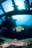 Diving, wreck in the Red Sea. Shipwreck in Egypt, Red sea stock images