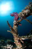 Diving, wreck in the Red Sea stock image
