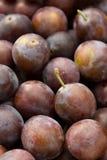 Divise en lots des prunes Photos stock