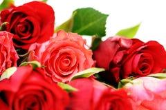 divise en lots des roses Image stock