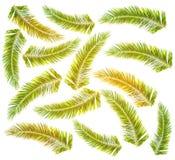 Divisez en lots le palmier vert avec la couleur du soleil d'isolement sur le fond blanc Images libres de droits
